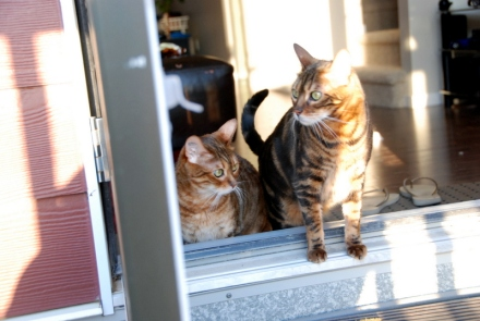 Brave Little Wildcats Thinking about Going Onto the Deck